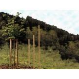 Palik, kołek do roślin ozdobnych zabezpieczony przed butwieniem